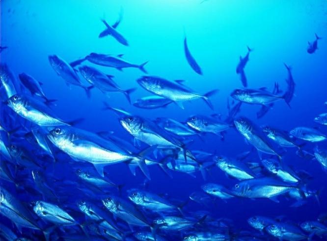 Bột Collagen Cá