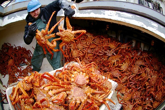 cua king crab alaska